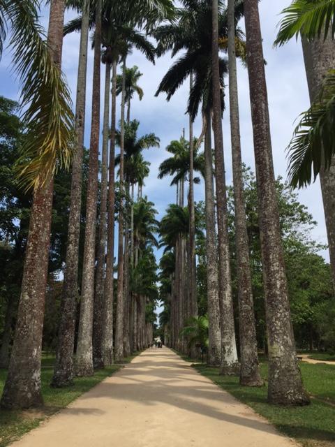 Jardim Botânico entrada principal um caminho importante